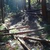 水源林の伐採