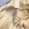 それでも、ネコ画像・ネコ動画の収集は止められない!