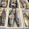 2018年5月29日 小浜漁港 お魚情報