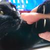 猫が爪を噛んだり引っ張る理由は?