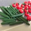 ミニチュア野菜作り
