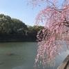#43 桜と春休みの終わり🍡