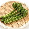 健康にいい!「山菜」コゴミに含まれる栄養と健康効果5選について