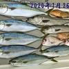 2020年に釣れた魚のご紹介👆 【  Boat Fishing / Stage in 日本海  】