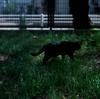APR.1,2019_黒猫