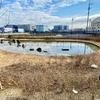 三郷インター南中央公園の池(埼玉県三郷)
