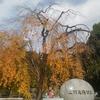 ゴッホとゴーギャン展@東京都美術館