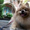 (小声で)実は、日本のペット業界ってね…… ~私が経験したペット業界の悲しい裏側~