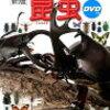 昆虫図鑑購入
