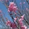 春の奥武蔵・ハイキングコースを彩るたくさんの花々 @蕨山