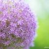 花か団子か