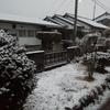 雪 降ってます