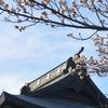 2017年01月29日(日)春が近い。出遅れるな!