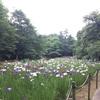 行田公園へ花しょうぶめぐり