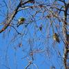 石神井公園で夏鳥探し 2021年4月11日