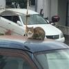 停まっている車と猫