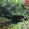 庭 中津川|剪定・伐採・草刈り(中津川・恵那・瑞浪・土岐・多治見・可児)