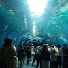種類もレア度も充実の水族館、アクアパーク品川