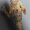 「見世物大博覧会」@国立民族学博物館 君は人間ポンプを見たか