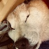 愛犬りょう21