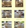 むかちんと千葉県へ動物旅行🐘✨