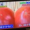 ソレダメ!美味しいトマト、ナス、とうもろこしの選び方(2017/7/19放送分)