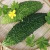 傷みやすいゴーヤはどうやって保存する?夏野菜を長持ちさせる保存方法。
