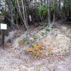 武田尾から大峰山・中山方面ハイキング、途中で道迷い(その2)大峰山周辺迷走