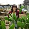 サボテンの新芽を収穫しました(2010.5.13)