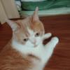 雨田甘夏、妨害です。【猫と弟とタイミング合わない事情】