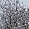 雑感 Vol.136 ~雪かき~