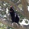木の上でゆったり、まったり