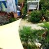 伊計島ガーデン ヒスイカズラの成長 多肉ガーデン