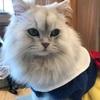 越谷レイクタウン【MOCHA】ネコのパラダイス、猫カフェで楽しむ3つの方法