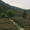 杭州へ。中国美術学院美術館と龍井茶畑と美味しいごはん(4日目)