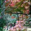 綺麗な紅葉の探し方