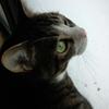今日も今日とて、「雪見猫」&小説更新♪