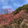 小石川植物園 2