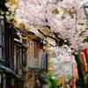 浅野川の桜・兼六園の桜 その1