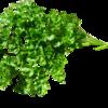 パセリの選び方 栄養足りていない人必見のハーブ野菜
