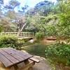 ニュージーランド旅行記17 グレートバリア島 カイトケ・ホットスプリングは天然温泉!