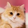 キャットウォークを設置して、愛猫と快適に暮らす家づくり
