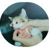 猫の病気「尿路結石」