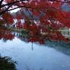 モネの池 小雨のモミジ