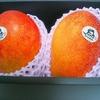 【ふるさと納税】宮崎県の完熟マンゴーでプチ贅沢!本当に甘いマンゴーって初めて食べました♪