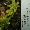 1月17日誕生日の花と花言葉歌句