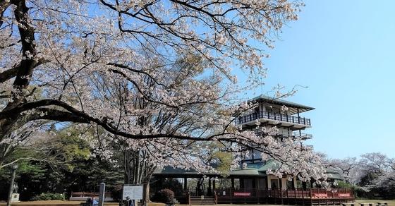 【行ったつもりシリーズ】横浜・川崎の花見スポットをサイクリング(前編)
