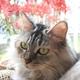 猫と彼岸花とスケキヨ