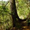 高尾山登山コース・3号路(カツラ林コース)