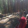 その4熊野詣で!中辺路歩き(大雲取越え・小雲取越え)の記録